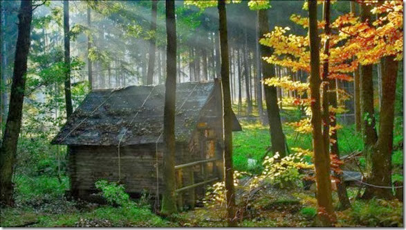 house-woods-perfect-7