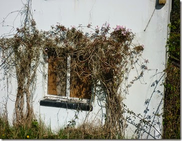 clematis clings on at cobblers lock