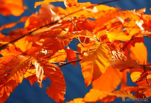 11. autumn gold-kab
