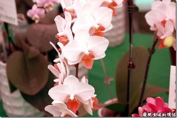 2012台南蘭花展22