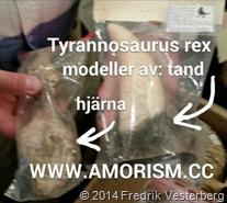 bm-image-778053 Tyrannosaurus rex hjärna och tand. Med amorism