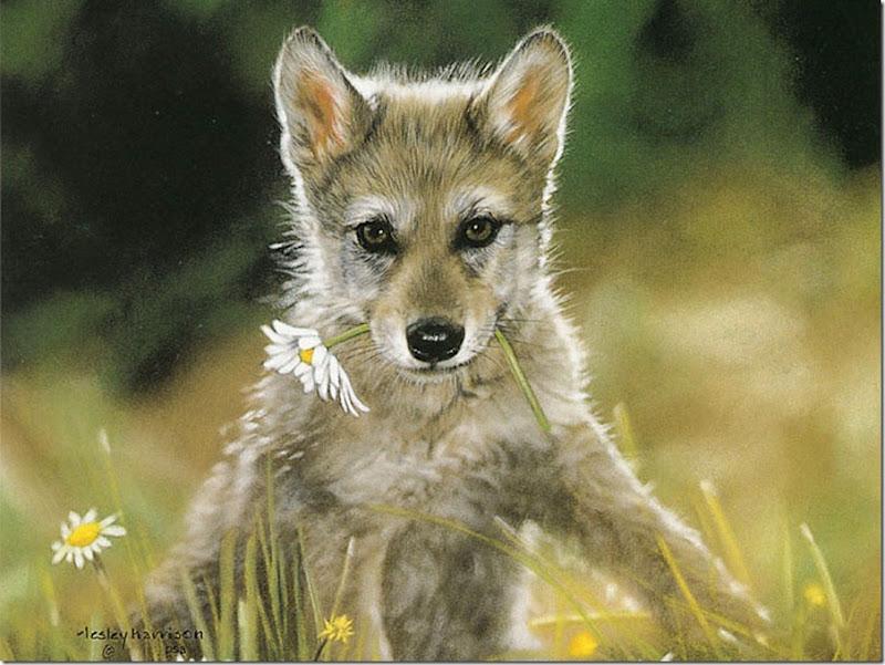 animales tiernos (13)