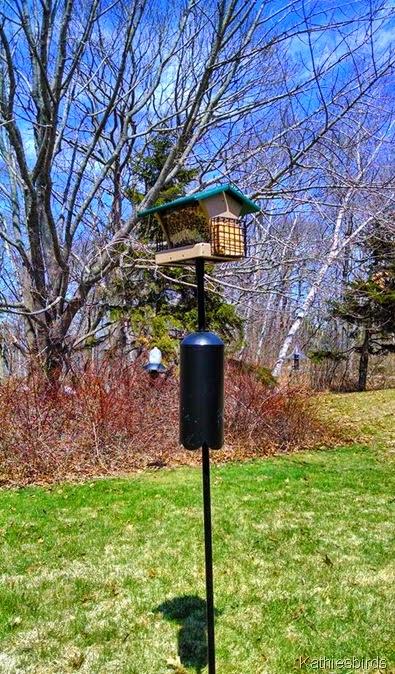 4. 4-25-14 new feeder