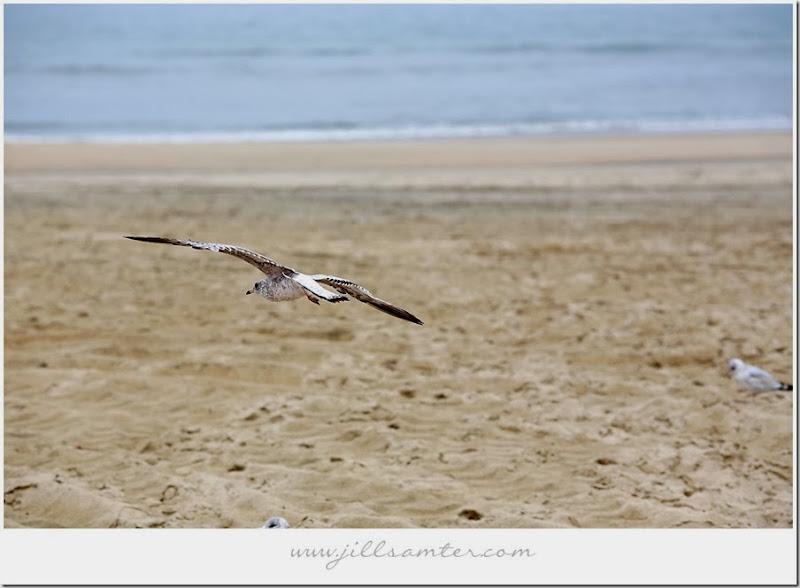 birdlanding1