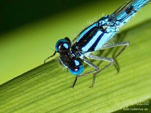 macro_20110611_dragonfly1a