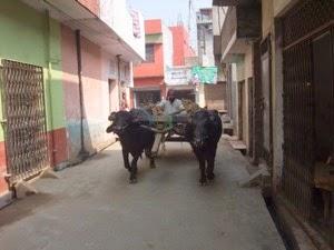 Bullock Traffic