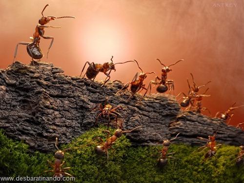 formigas inacreditaveis incriveis desbaratinando  (72)