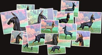 View Origami Doberman Pinscher