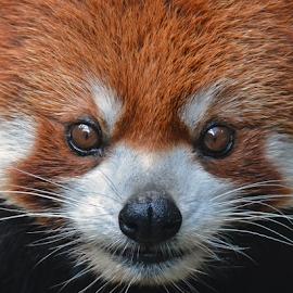by Shelly Wetzel - Animals Other Mammals