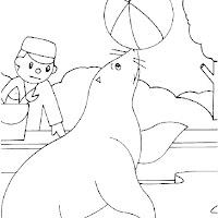 dibujo-foca-pelota.jpg