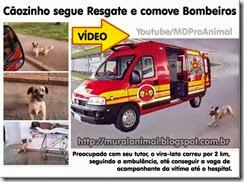 caozinho_viatura_bombeiros_thumb[1][3]