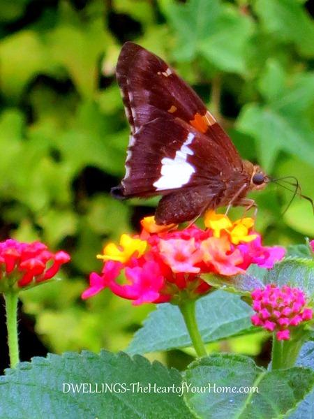 garden-butterflies