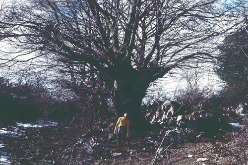 Grande faggio in inverno Pratone m.Gennaro e Donatella Piccioli (picc.blu)