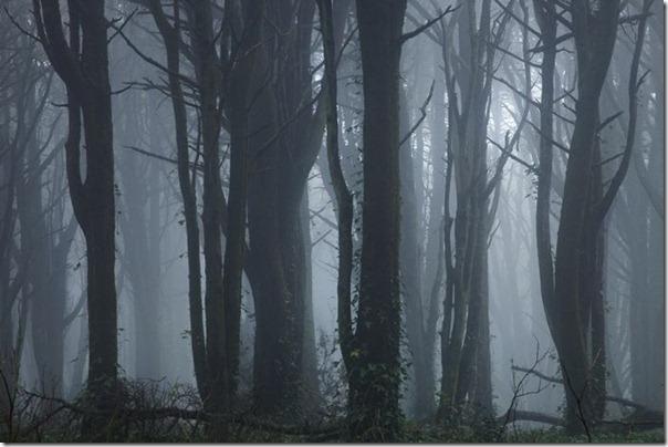 Florestas sombrias (5)