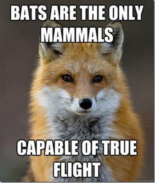 fox-facts-meme-46