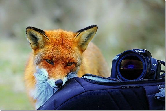 camera-care-tips-2