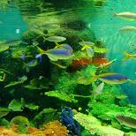 at the Shinagawa Aquarium in Shinagawa, Tokyo, Japan