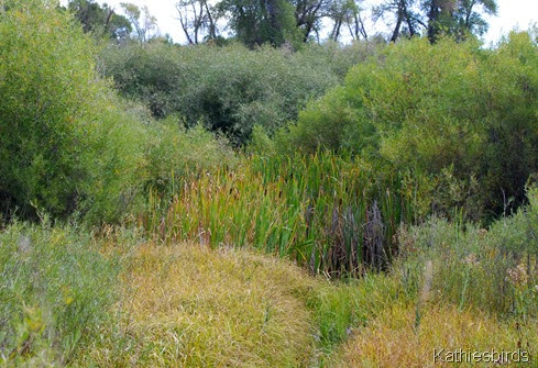 9. cattails-kab