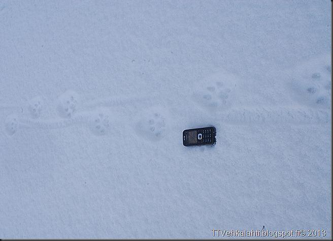 ilves tassujälki lumessa finpyyntie  kimaluskuvia 103