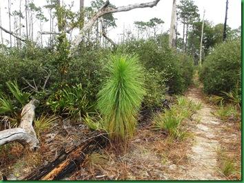 Pat's Island Trail 022