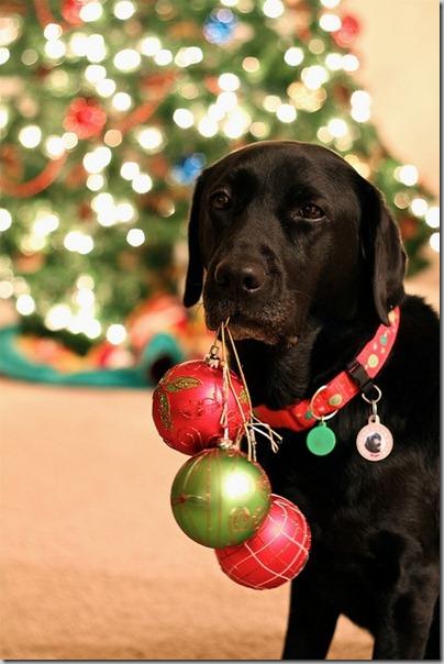 perro gorritos navidad (25)