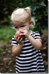 Apple picking, Sadie 4