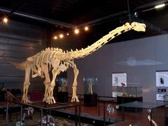 2008.09.05-008 Ampelosaurus atacis