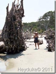 Jekyll Island Driftwood Beach