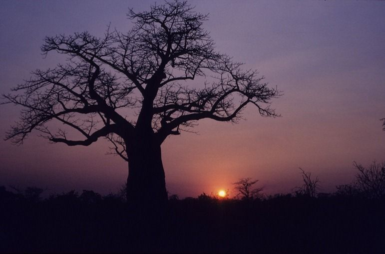 Sunset in Botswana from flickr user dkeats