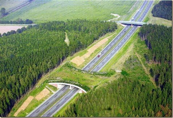 Ponts pour animaux - passages à faune (19)