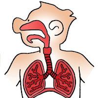 science_respiratory_system.jpg