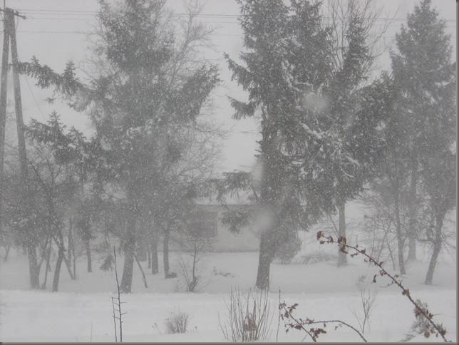 Zima 015