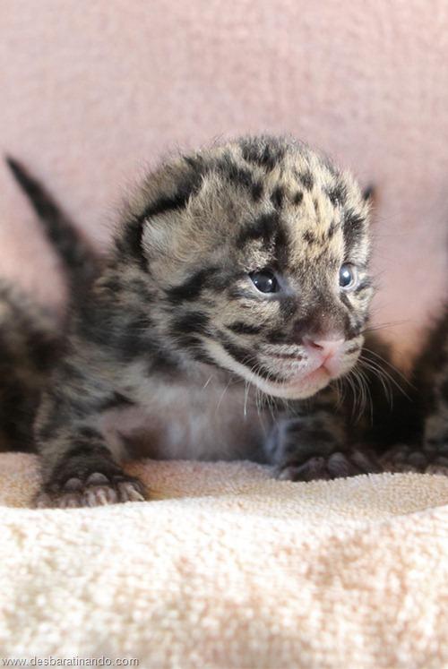 filhotes recem nascidos zoo zoologico desbaratinando animais lindos fofos  (33)