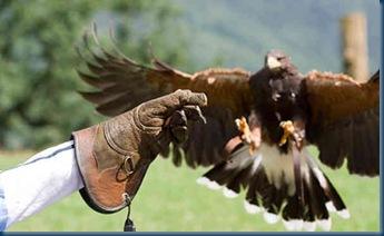 hawk-landing