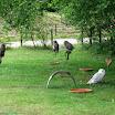 2011 juin - Espace animalier Rambouillet