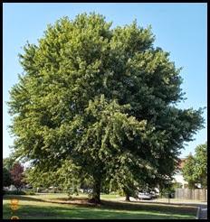 Day 8 Tree (3)