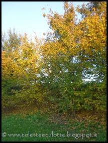 Passeggiando per Padulle - novembre 2013 (59)
