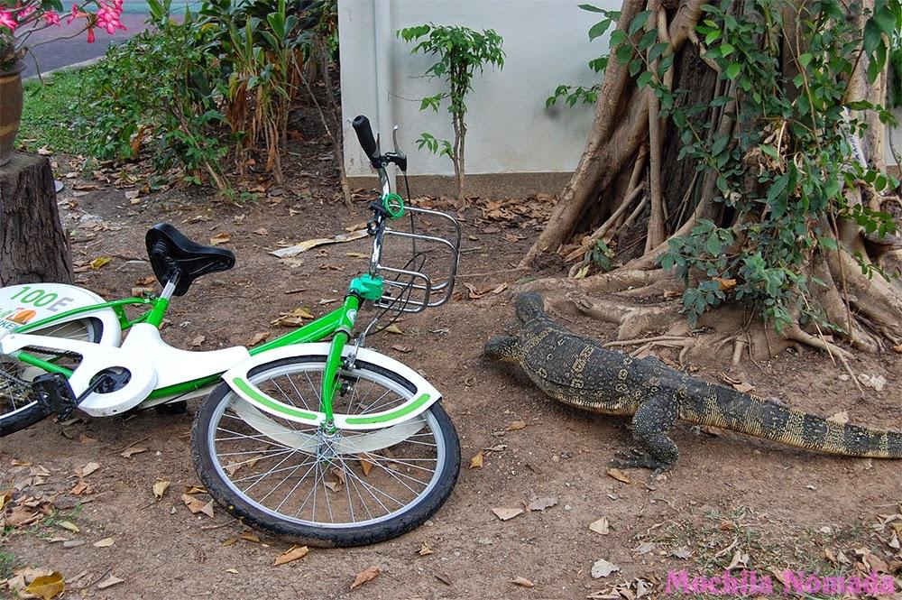 Biciletas gratis para turistas en bangkok mochila n mada - Casetas para bicicletas ...