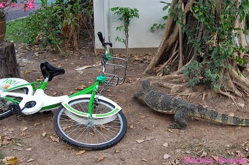 bangkok-bicicleta-gratis-4.JPG