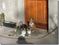 Cats_and_dog