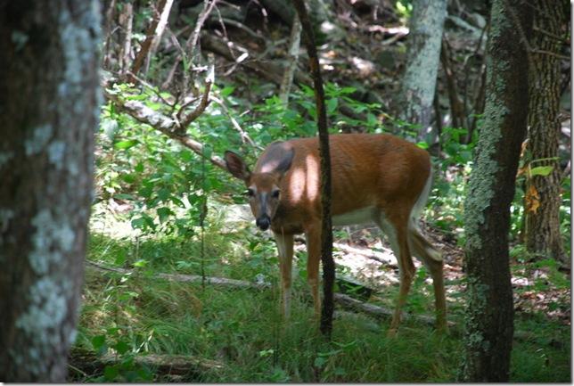 08-24-2011 A Shenandoah NP - Stony Man Hike (49)