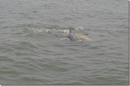 06-06-11 Tybee Beach 029