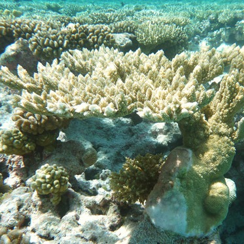 Life underwater: Coral