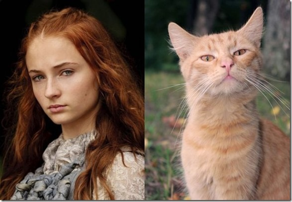 cats-game-thrones-17