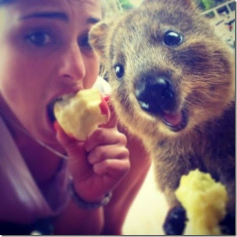 selfies-australian-quokka-015