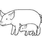cochon1.jpg
