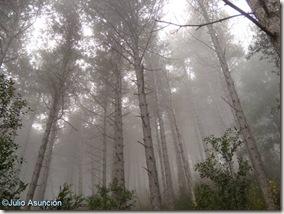 Niebla en el pinar de la Higa de Monreal