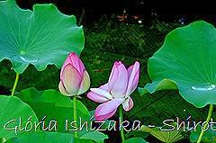 87 - Glória Ishizaka - Shirotori Garden