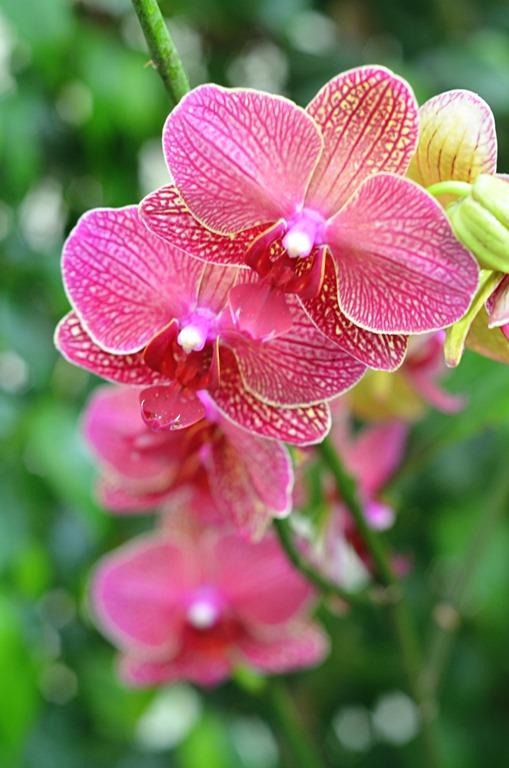 Botanical Garden 020