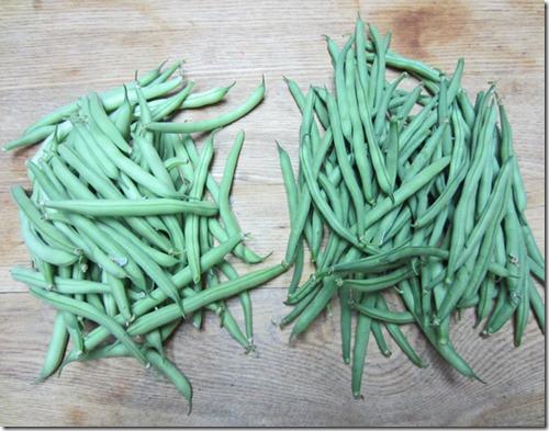 Provider (left) and Fresh Pick bush beans